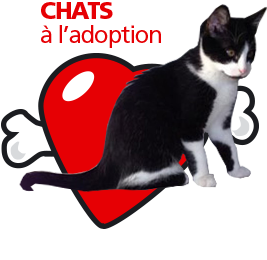 bouton_chats_adoption