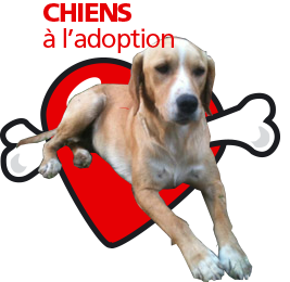 bouton_chiens_adoption