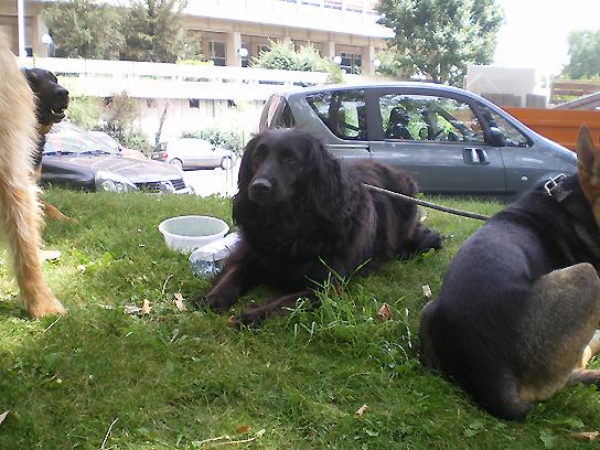 distribution_chiens