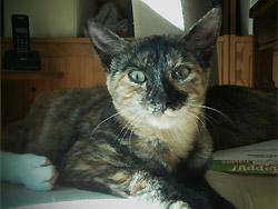 Faustine quelques mois plus tard! Tranquille et câline, elle a été adoptée!